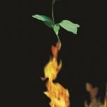 36.jesień karta pocztowa z motywem róży